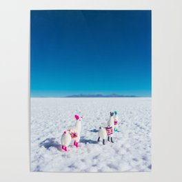 Llamas looking into the distance on the Salt Flats, Bolivia Poster