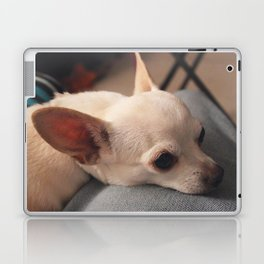 Lap Dog Chihuahua Laptop & iPad Skin