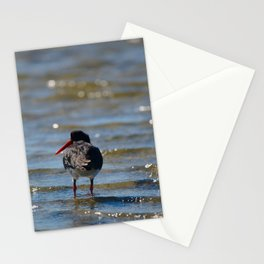 An Oyster Catcher Hunting In The shallows Stationery Cards