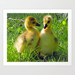 Cute Baby Canada Geese Stylized Photo Illustration Art Print