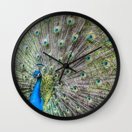 The peacock portrait Wall Clock
