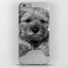 Dog: Border Terrier Slim Case iPhone 6 Plus