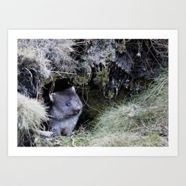 Wombat Joey Art Print