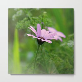 Pink Daisy Photo Metal Print