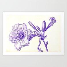 Daylily Art Print