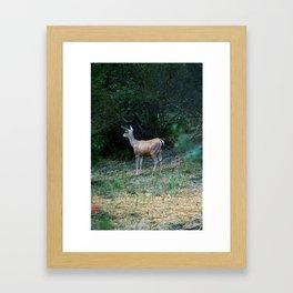 The Forest Fringe Framed Art Print