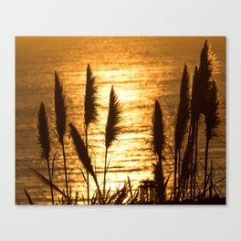 Fields of Gold in Ocean Canvas Print