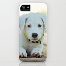 Poppy | Chiot iPhone Case
