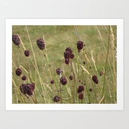 French Meadow Nature Art Print