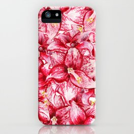 Red flowers of amaryllis iPhone Case