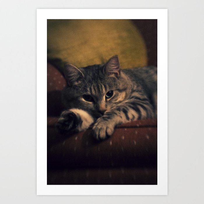 phil cat ii Art Print