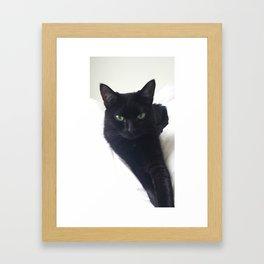 Phoebe the Cat Chilaxing Framed Art Print