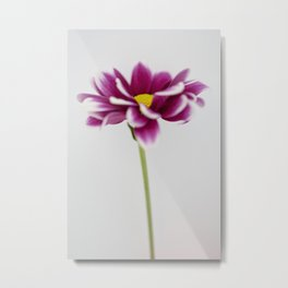 Chrysanth Metal Print
