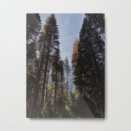 Yosemite Forest Metal Print