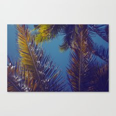 Palm Sky Canvas Print