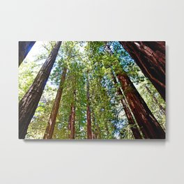 Muir Woods Study 18 Metal Print