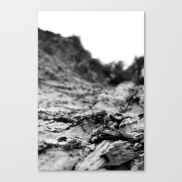 Scorch Canvas Print