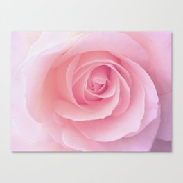 Flower | Pink Rose |  Photography | Nature | Spring | Summer Canvas Print