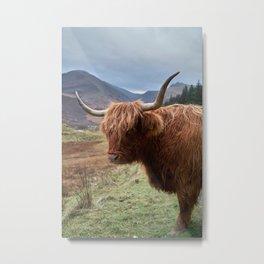 Highlander - II Metal Print