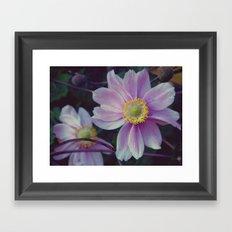 Sept. Flower  Framed Art Print