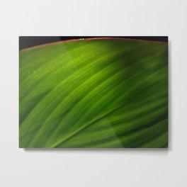 Leaf's Edge Metal Print