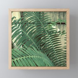 Fern Leaves By Window With Curtains Closed Tightly Framed Mini Art Print