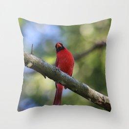Cardinal Series II Throw Pillow