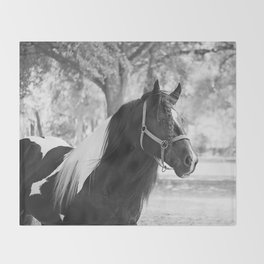Stunning Gypsy Vanner Throw Blanket