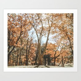 Autumn Scenes Art Print