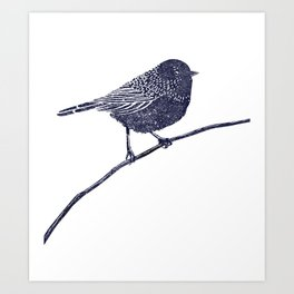 A peaceful bird Art Print