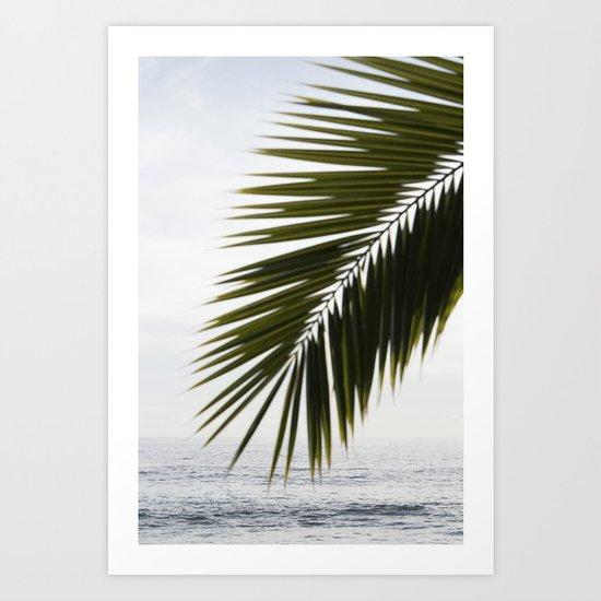 Beach Palm Art Print