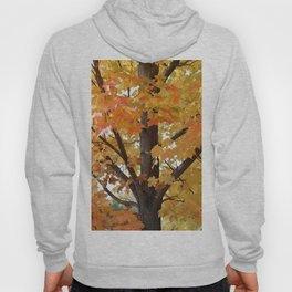 Orange Maple Tree Hoody
