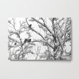 Black Birds on Snow Covered Branches Black and White Photography Metal Print