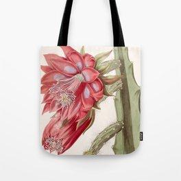 Disocactus speciosus/Cereus speciosissimus Tote Bag