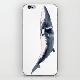 Baby Minke whale iPhone Skin