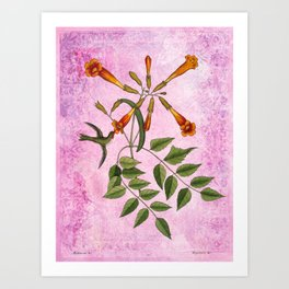 Hummingbird with Trumpet Vine, Vintage Natural History Collage Art Print