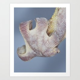 Sticky gecko foot Art Print
