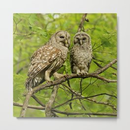 Mom and baby barred owl Metal Print