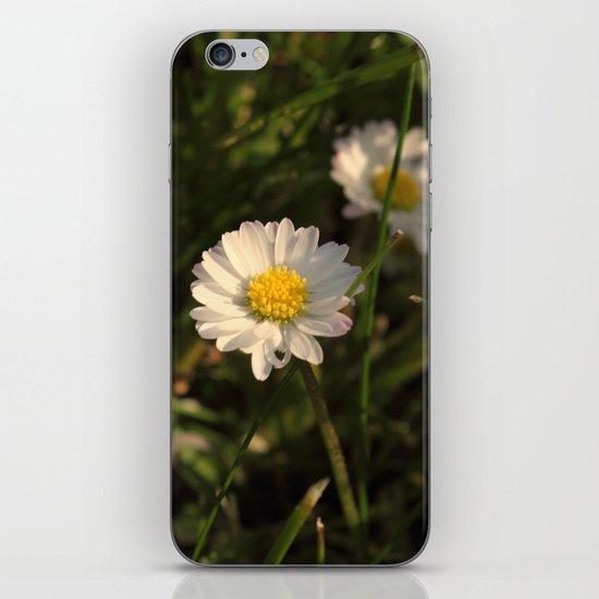 Daisy Daisy iPhone & iPod Skin