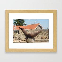 Seal Doing A Trick Framed Art Print