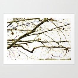 Redpoll birds in aspen tree Art Print