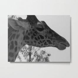 Sanctioned Giraffe Metal Print