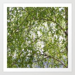 wood birch Art Print