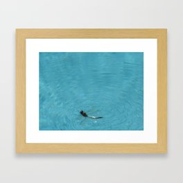 BUG ON THE WATER Framed Art Print