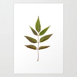 Leaf Botanical Print Art Print