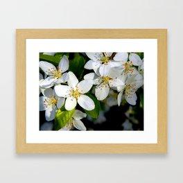 Floral Beauty #9 Framed Art Print