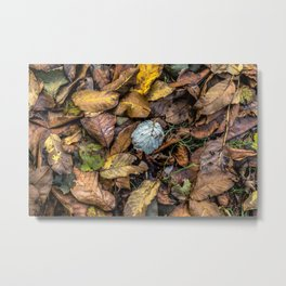 Summer is gone, Autumn is finally here Metal Print