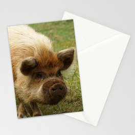 March of the Ginger Pig Stationery Cards