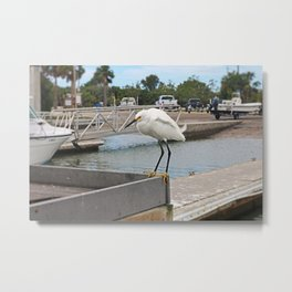 Sammy Swift Metal Print