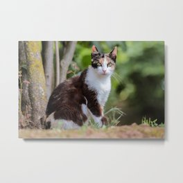 Are you meowing to me? Metal Print